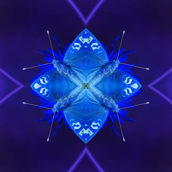 De Blauwe Insecten van Mark Scheper