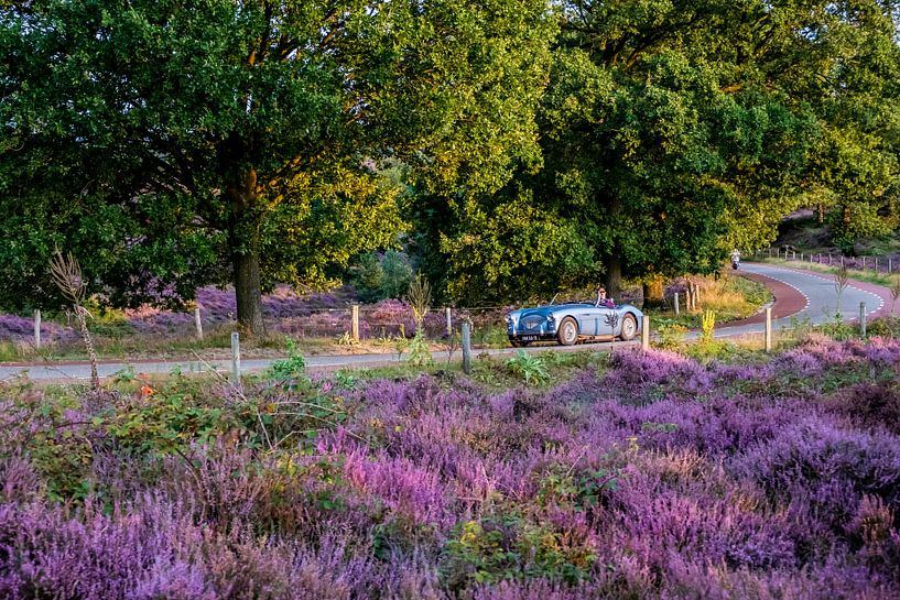 Heide in bloei op de Posbank van Marcel Krijgsman
