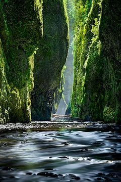 Groene overwoekerde canyon-kloof in Oregon / USA. van Fine Art Fotografie