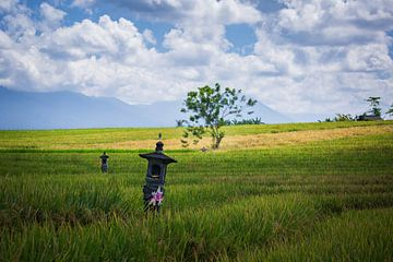 Rijstvelden tempels in Bali van Rudolfo Dalamicio