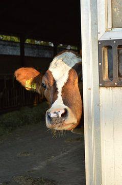 Kiekekoe! Look a Cow! von Grietje van der Reijnst-Brak