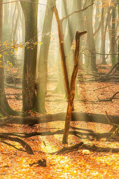 Nebliger Wald während eines schönen nebligen Herbstmorgens von Sjoerd van der Wal