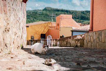 Oude kat op Sardinië van Tom Rijpert