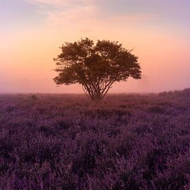 Mistige ochtend op de Zuiderheide bij Hilversum van Michiel Dros