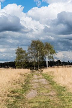 Landschap landgoed Heidestein Driebergen-Rijsenburg von Wil Vlasveld