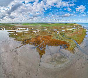 Texel - Le rauque - Red Marsh samphire 03