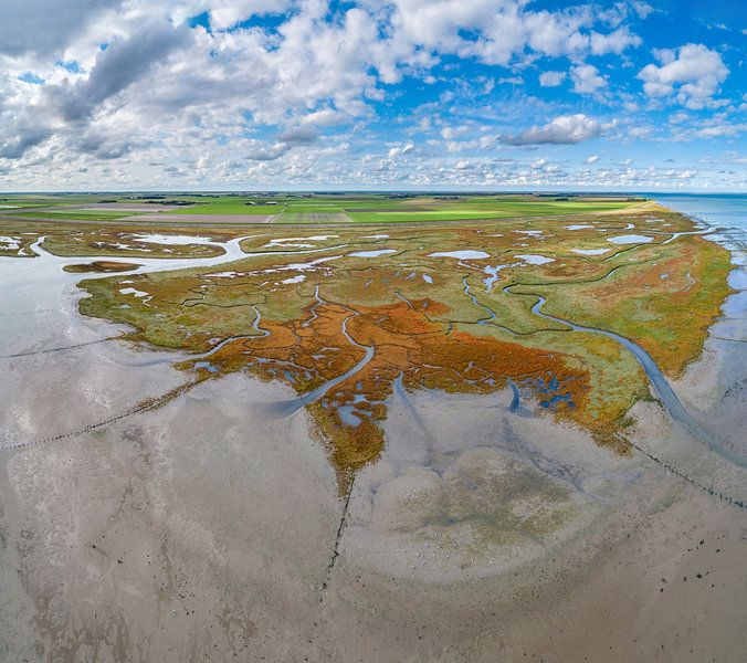Texel - Le rauque - Red Marsh samphire 03 sur Texel360Fotografie Richard Heerschap