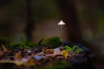 lampekapje van Tania Perneel