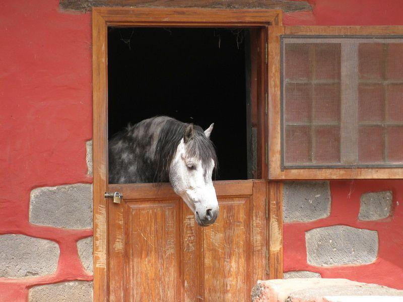 Paard sur Adrie Berg