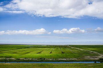 Zomergroen van Marnefoto .nl