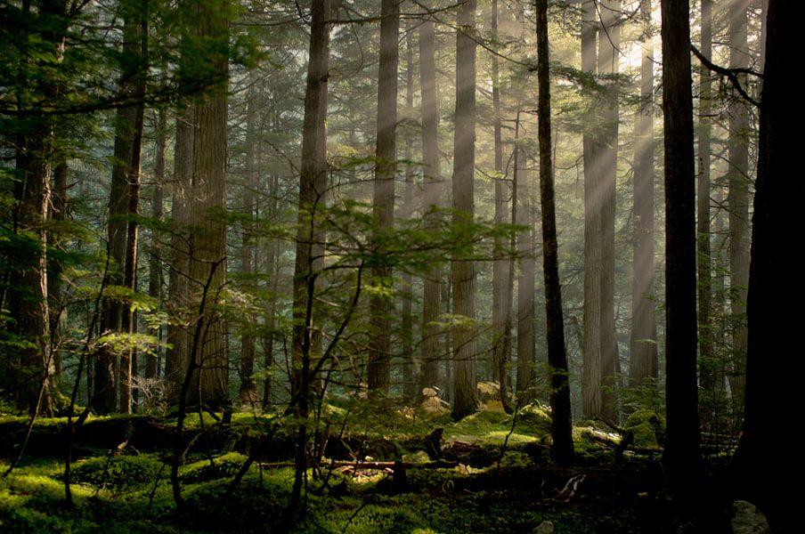 Berg Lake Trail van Jasper van der Meij