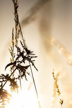 Markelo voor de zonsondergang. sur Frank Slaghuis