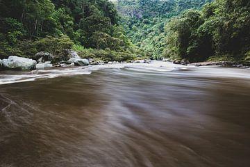 Rio Magdalena en bossen von Ronne Vinkx