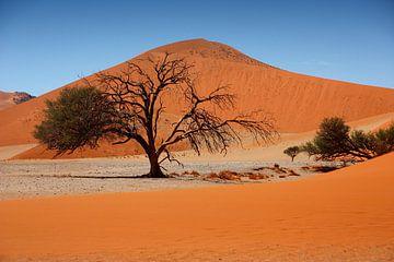 NAMIBIA ... Namib Desert Tree II von Meleah Fotografie