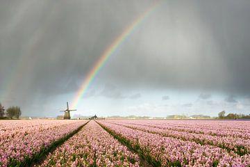 Regenbogen über Windmühlen und Hyazinthenblumen von iPics Photography