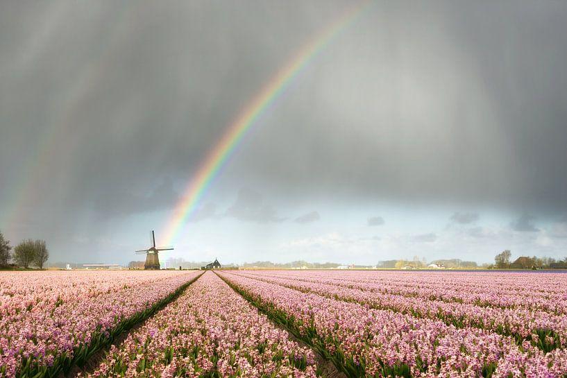 Regenboog met molen en roze hyacinten van iPics Photography