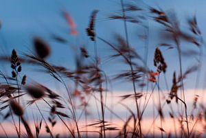 Wuivende grashalmen aan de kust, met zonsondergang  van Margo Schoote