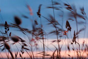 Wuivende grashalmen aan de kust, met zonsondergang  von Margo Schoote