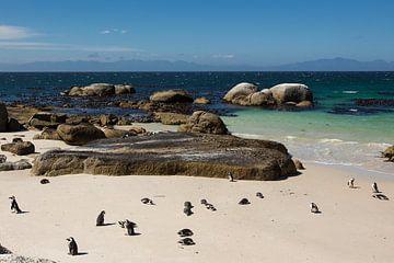 Pinguins in Zuid Afrika van Thea.Photo