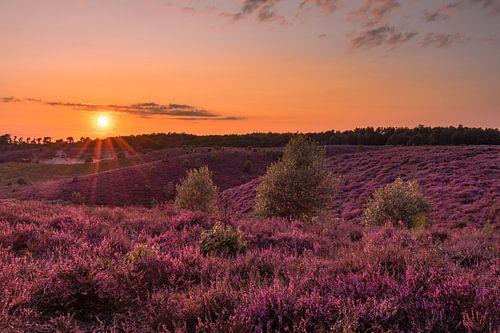 Zonsondergang op de paarse heide