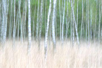 Tussen de bomen von Remco Stunnenberg