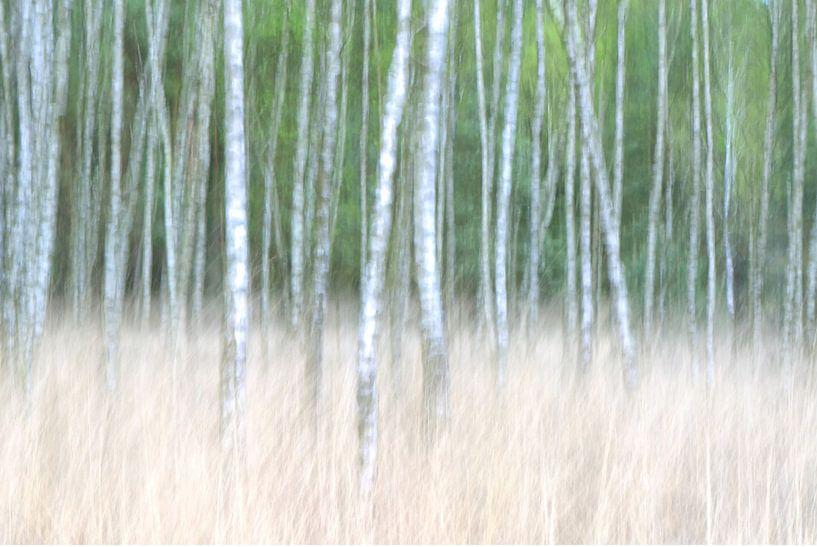 Tussen de bomen van Remco Stunnenberg