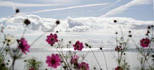 Le printemps au Markermeer