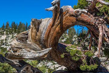 Getordeerde boom van Peter Leenen