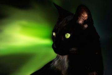 Elegante zwarte kat van Nannie van der Wal