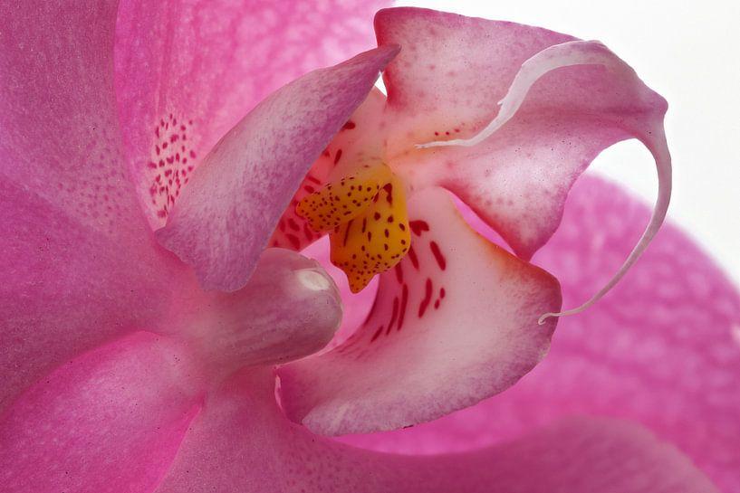 Orchidee hart van Tanja van Beuningen