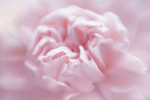 Sweet softness