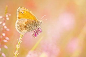 Heuschrecke in Pastelltönen von Roosmarijn Bruijns