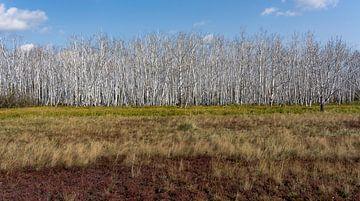 Taiga in Sibirien von Daan Kloeg