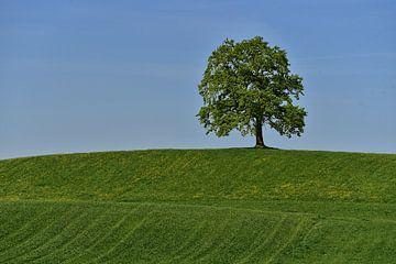 old tree - bavaria van Peter Bergmann