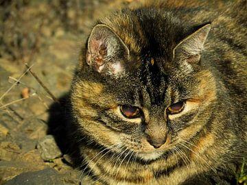 Katze 01 von Tomas S.