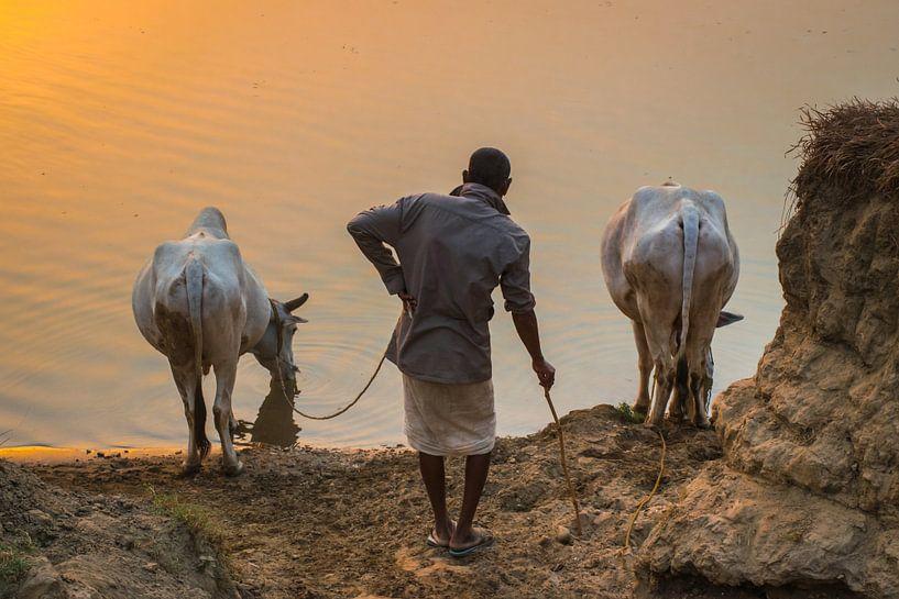Ossenhoeder laat zijn dieren drinken, Nepal van Rietje Bulthuis