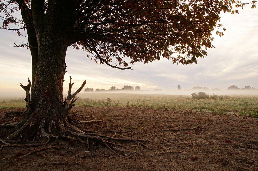 out in the field van Dirk van Egmond