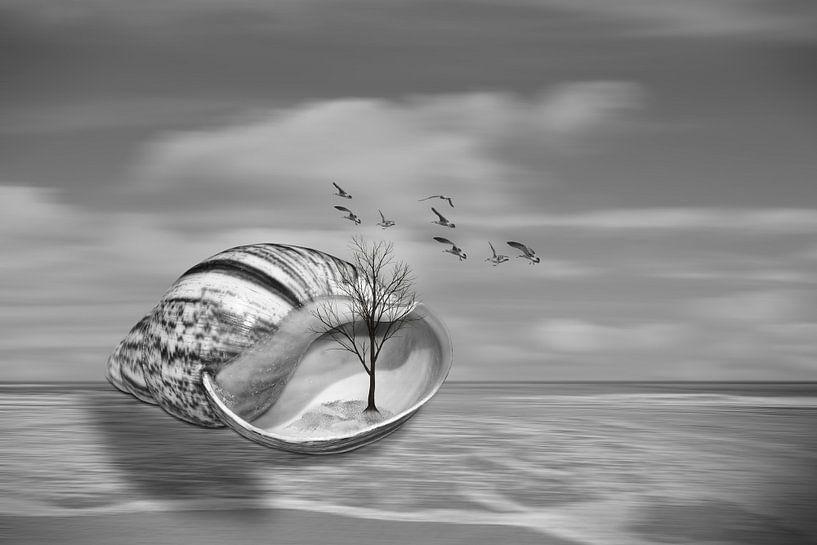 Seashell on the beach van Ursula Di Chito