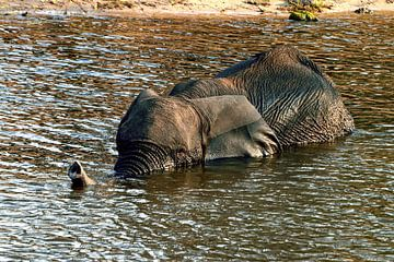 Olifant neemt een bad in de Chobe in Botswana van Merijn Loch