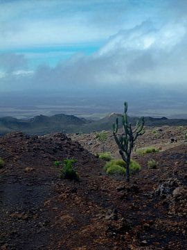 Eenzame cactus van Marieke Evertsen