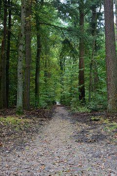 Een rechte pad door het bos van Gerard de Zwaan