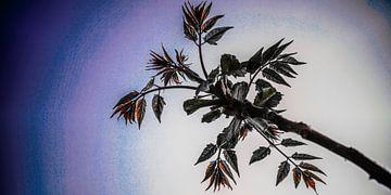 Plant Bloemen von Jane Changart