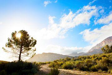 Zonsondergang op de Afrikaanse Cederberg van Dexter Reijsmeijer