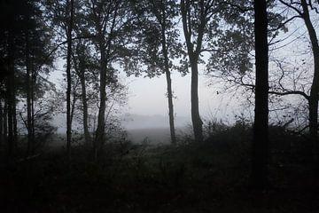 Wald in schwarz und weiß von Karin vanBijleveltFotografie