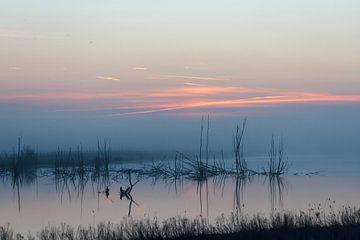 mistige morgen van ton vogels
