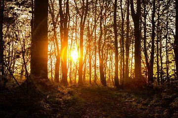 Zon schijnt laag door de bomen. van Hartsema fotografie