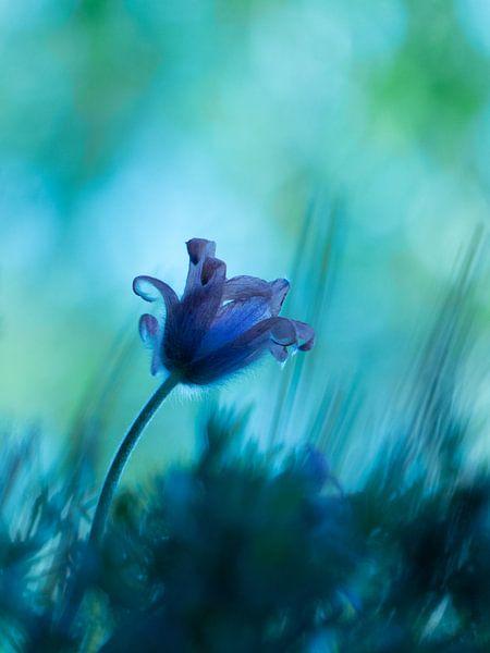 Bloem Wildemanskruid mystiek van bird bee flower and tree