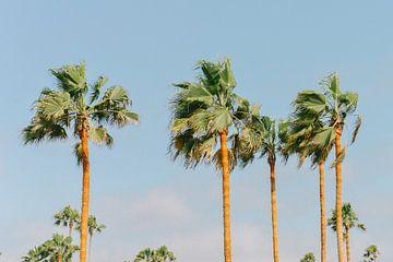 Palmbomen | Miami | USA | Reisfotografie van Mirjam Broekhof