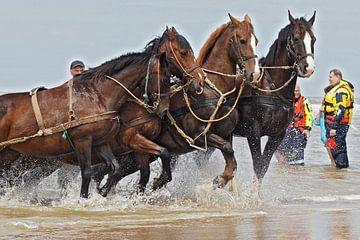 reddingsboot met paarden uit ameland van Dirk van Egmond