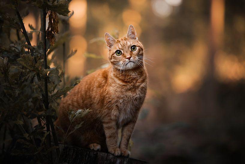 Rote Katze im Wald mit schönen orangefarbenen Farben von Lotte van Alderen